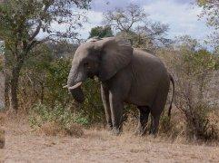 Kruger National Park, South Africa 2011