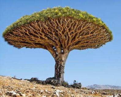 tree_1-638x0_q80_crop-smart
